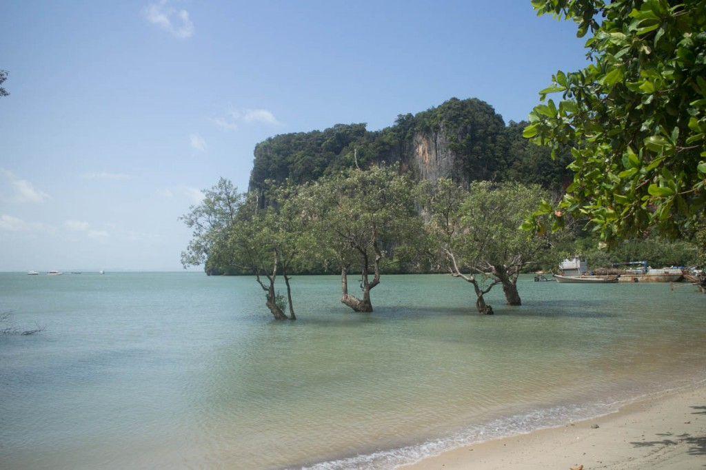 Just some trees at the Railay pier.