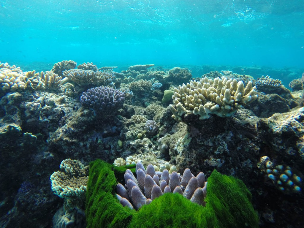 A gorgeous coral scenery at Flynn Reef - Tracey's Bommie.