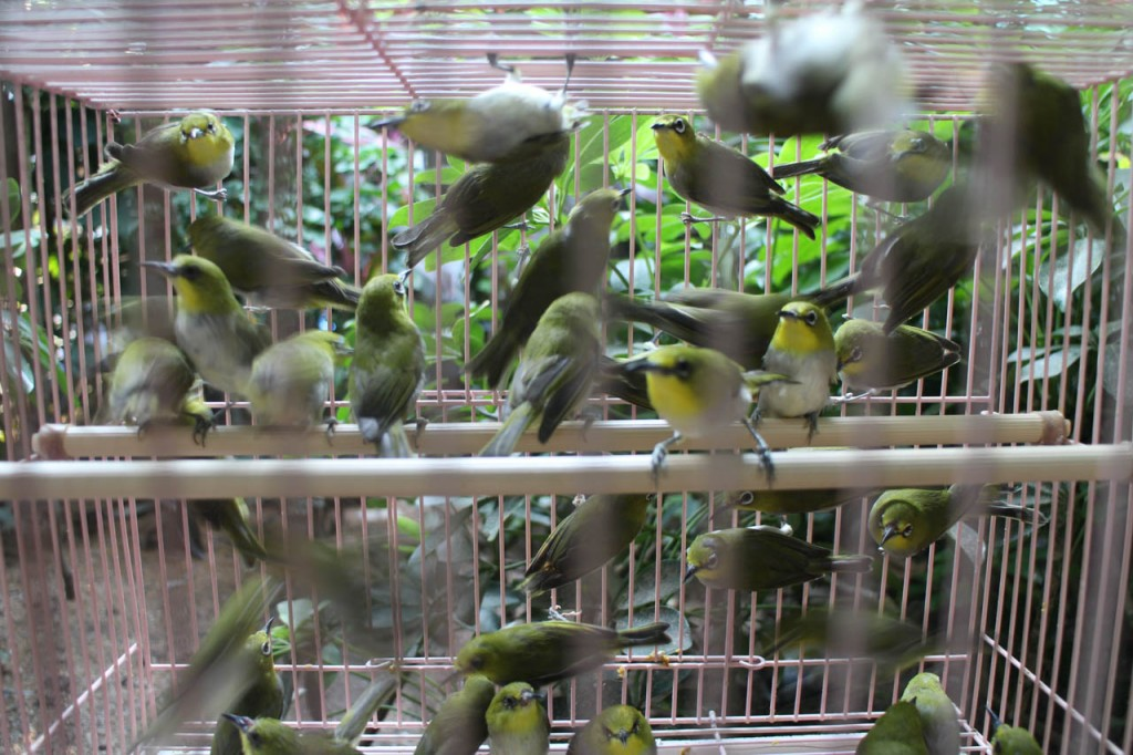 The bird garden is definitely a place you have to see when visiting Hong Kong.
