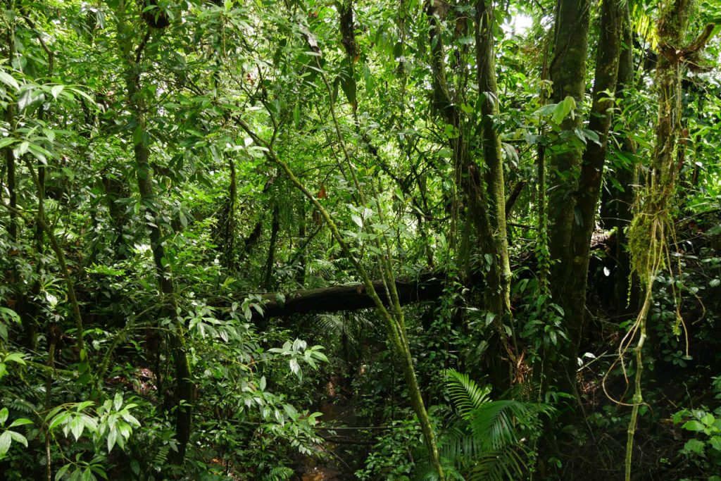 Wouldn't want to get lost in a jungle in Costa Rica.